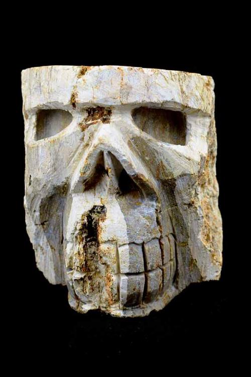 Versteend Hout, boomgeest schedel, petrified wood, crystal skull, kristallen schedel, kopen