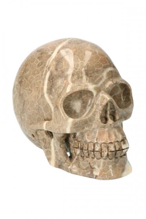 Slangenhuid fossiel koraal realistische kristallen schedel, kopen, crystal skull, edelsteen, edelstenen