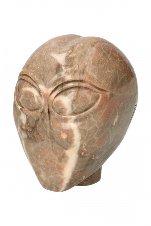 Slangenhuid fossiel koraal alien kristallen schedel, slangen alien, alien slangen jaspis, alien kristallen schedel, alien crystal skull, kopen